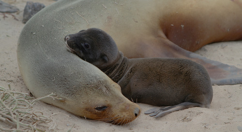 10 animal embraces to melt your heart