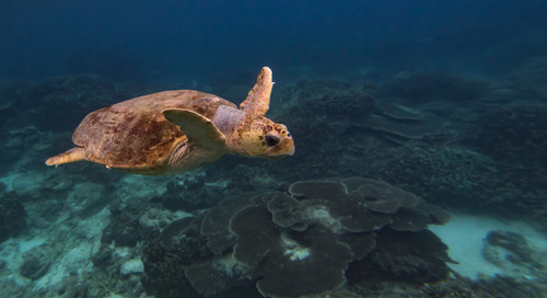 What's really going on with the Great Barrier Reef?