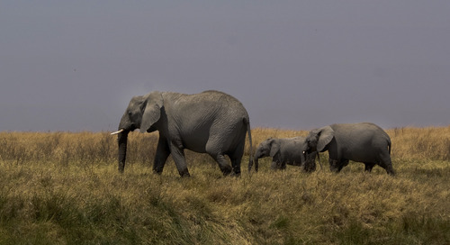5 amazing facts about Tanzania's Selous Game Reserve
