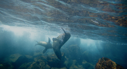 The best time to travel to the Galápagos