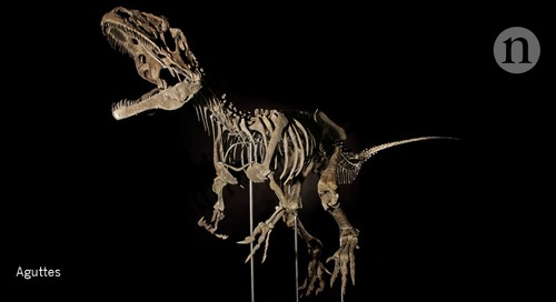 Carnivorous-dinosaur auction reflects rise in private fossil sales