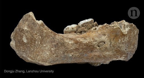 Biggest Denisovan fossil yet spills ancient human's secrets