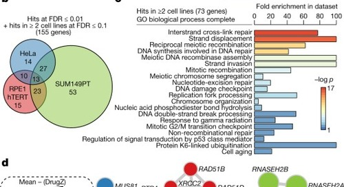 CRISPR screens identify genomic ribonucleotides as a source of PARP-trapping lesions