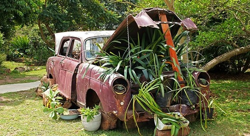 How to transport plants in a car when moving
