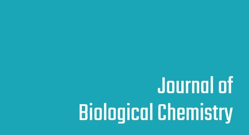 Mechanisms of unphosphorylated STAT3 transcription factor binding to DNA