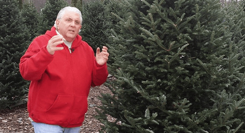 Produce Pete: 'Tis the Season for Christmas Trees