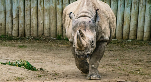 Stories of Resilience: Cincinnati Zoo & Botanical Garden