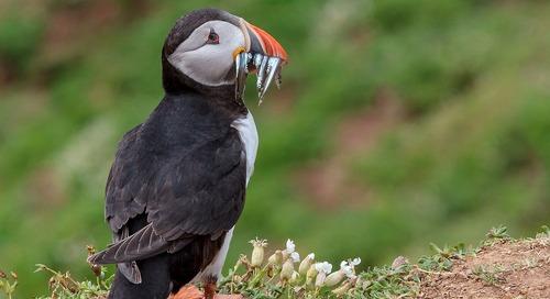 ZEISS Birding