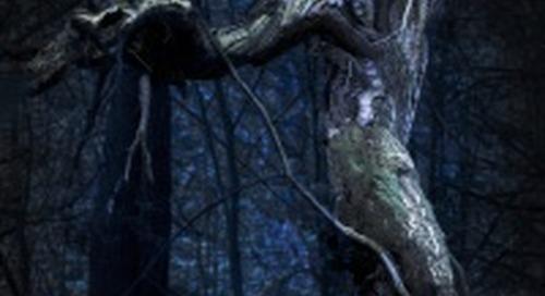 Dante's Dark Forest