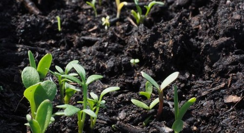 Land-Applied Sewage: Do Farmers Benefit from Recycled Sewage?