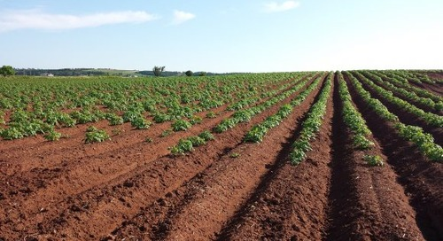Recycled Sewage: What Are We Putting on Our Farmland?