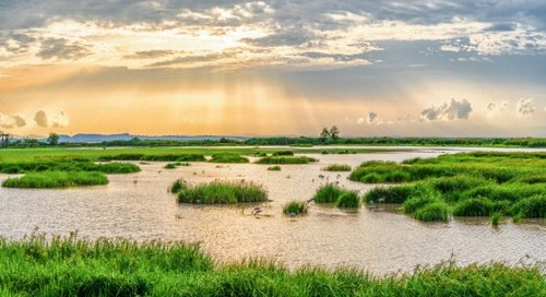 Do Constructed Wetlands Improve Water Quality?