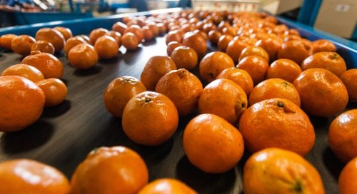 Bio Energizer® Improves SVI by 50% at Citrus Plant Wastewater Treatment