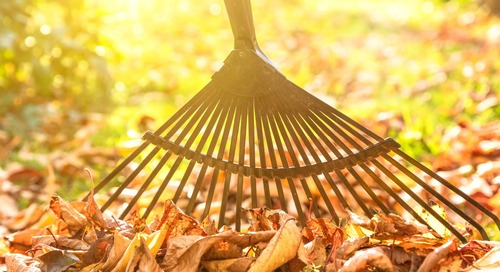 7 Crucial Yard Maintenance Moves You May Forget to Do This Fall