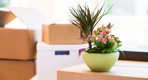 How to Ship Plants: Keep Your Beloved Buds Safe During a Move