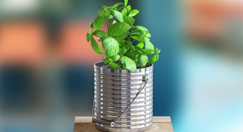 Container Gardening 101: Top Tips to Turn Out Your Blooms, No Yard Required