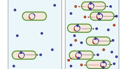 Quantifying Individual Proteins Per Bacterial Cell