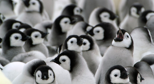 World Penguin Day: Fun Penguin Facts You Need To Know