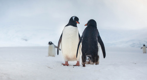 10 Things You Might Not Know About Antarctica
