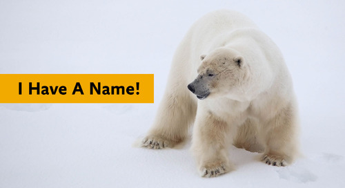 Name the Quark polar bear - the Winning Name