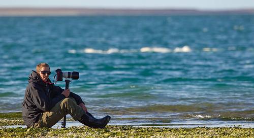 Polar Wildlife Photography Tips from an Arctic Expert