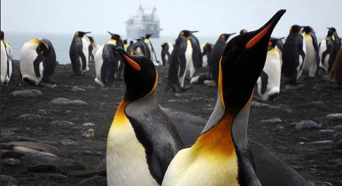 Meet Quark Expeditions Polar Travel Adviser Naomi Box