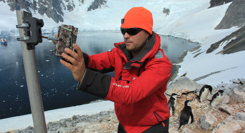Polar-Passionate 'Citizen Scientists' Invited to Participate in Antarctic Penguin Watch Project