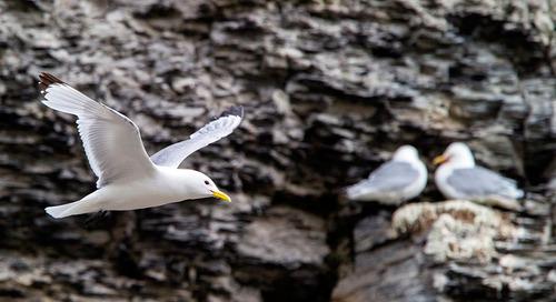 Top 5 Bird Cliffs in the Arctic