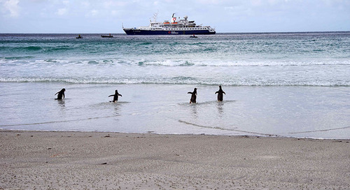 The Top Landing Sites in the Falkland Islands