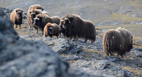 Greenery and More in Greenland: Parks and Nature Reserves