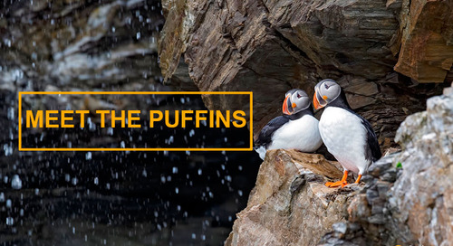 Meet the Puffins: Iconic Seabirds a Passenger Favorite