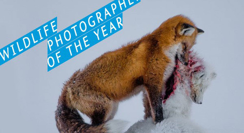 Photography Tips from 2015  Wildlife Photographer of the Year