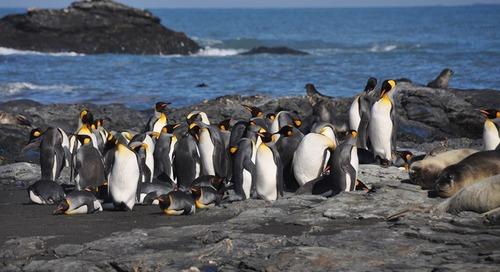 Meet Penguinologist Dr. Tom Hart