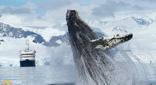 Epic Whale Watching in Antarctica