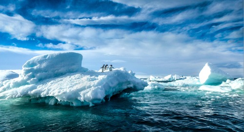Penguins on Ice: How a Hobbyist Captured an Award Winning Photograph