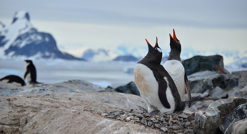 Quark Expeditions Supports Penguin Lifelines