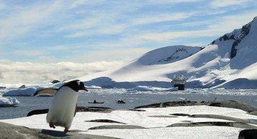 Penguins and sea kayaks