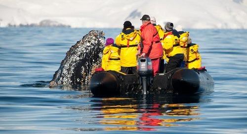 Curious Humpback Whale