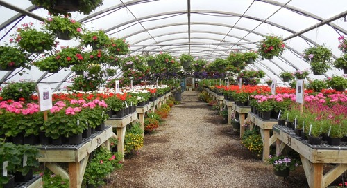 Annual plant and greenhouse sales coming up in Battle Ground schools