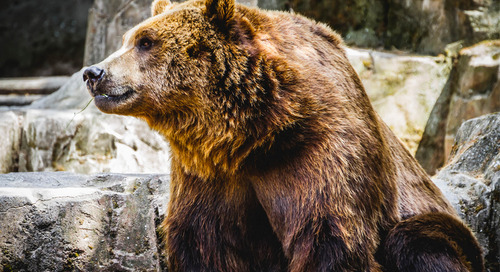 Apply These 5 Secrets for Getting a Loan and Surviving in a Bear Market