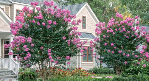 10 Flowering Trees Landscape Architects and Designers Love (13 photos)