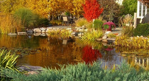 See How 4 Gorgeous Gardens Win With Fall Color and Texture (15 photos)