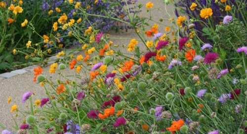 3 Color Palettes to Help Set Your Garden's Mood (15 photos)
