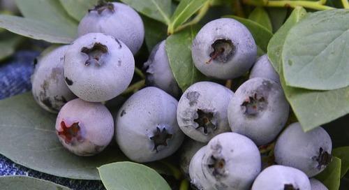 15 Favorites for Your Summer Edible Garden (15 photos)
