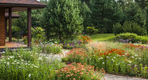 6 Steps to Creating Your Butterfly Garden (11 photos)