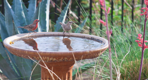 Make Your Garden a Haven for Backyard Birds (14 photos)
