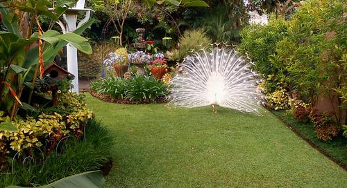 Garden Tour: It's Always Spring in This Guatemalan Paradise (24 photos)