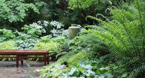 9 Top Native Plants for Beginning Gardeners (11 photos)