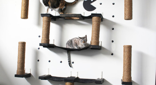 How to Design Your House Around Your Pet (11 photos)