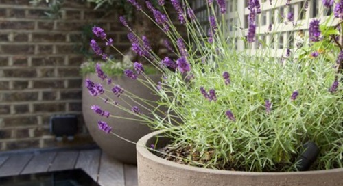 How to Choose the Right Plant Container (14 photos)